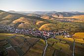 France, Haut Rhin, Alsace Wine Route, Katzenthal, Saint Nicolas church, Wineck castle, vineyard (aerial view)