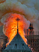 France, Paris, area listed as World Heritage by UNESCO, Notre Dame Cathedral of 14th century Gothic architecture during the fire of 15th April 2019, close up on the flames surrounding the cross