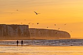 France, Somme, Ault, Sunset on the cliffs from the beach of Ault, walkers and photographers come to admire the landscape and seabirds