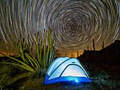 Organ pipe cactus at night with Geminid Meteor Shower, Organ Pipe Cactus National Monument, Arizona, United States of America, North America