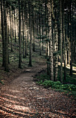 Path in the woods with sun light filtering through the trees, Dardagna Waterfalls, Parco Regionale del Corno alle Scale, Emilia Romagna, Italy, Europe
