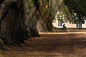 A person sitting peacefully in a tree-lined alley with sun rays filtering through leaves, Noirlac Abbey, Cher, France, Europe