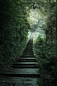 The endless stairs to ascend Mount Emei, Emeishan, Sichuan, China, Asia