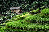 Small bamboo house in the Longsheng rice terraces, Guangxi, China, Asia