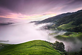 Purple sunset with fog above the Longsheng rice terraces, Guangxi, China, Asia