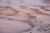 Sand dunes detail before dawn in the Rub al Khali desert, Oman, Middle East