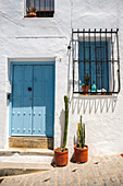 Two cactuses outside front door of Spanish house
