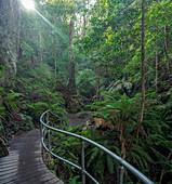 Australia,New South Whales,Blue Mountains National Park,Hiking trail in Blue Mountains National Park