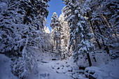 Winter mountain forest above the Eibsee, Grainau, Bavaria, Germany, Europe