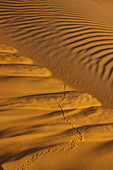 Tracks and patterns on sand dunes outside Arabian Nights Village desert resort at dusk, Arabian Nights Village, Razeen Area of Al Khatim, Abu Dhabi, United Arab Emirates, Emirates, Middle East