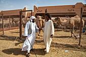 Two men and dromedaries in the Al Ain Camel Market, Al Ain, Abu Dhabi, United Arab Emirates, Middle East