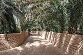 Von Dattelpalmen gesäumter Weg in der Oase Al Ain, Al Ain, Abu Dhabi, Vereinigte Arabische Emirate, Naher Osten