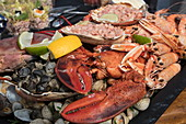 A delicious seafood platter, prepared by chef Boy Schuiling from restaurant 't Paakhuus Texel, is served on board the 1902 sailing ship Iselmar during the Wadden Sea crossing from Harlingen to Terschelling, West Frisian Islands, Friesland, Netherlands, Europe