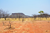 Angola; in the western part of the province of Cunene; Table Mountain and grass savannah with acacia trees typical of southern Angola