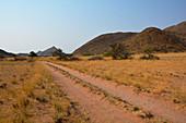 Angola; im südlichen Teil der Provinz Namibe; Iona Nationalpark; Ende der Trockenzeit; gebirgige Graslandschaft mit niederen Akazienbäumen und anderen Büschen;