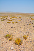 Angola; in the southern part of Namibe Province; northern part of the Namib Desert; Iona National Park; Endless gravel plain with little vegetation