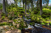 The course of the White Main at Bischofsgrün in the Fichtel Mountains, Upper Franconia, Bavaria, Germany