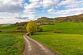 View of the Walberla near Ebermannstadt at the cherry blossom time in the afternoon, Upper Franconia, Bavaria, Germany