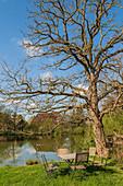 View of the village pond of Basthorst, Duchy of Lauenburg, Schleswig-Holstein, Germany