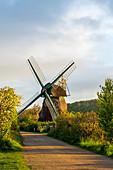Windmill Charlotte in the Geltinger Birk, Baltic Sea, nature reserve, Geltinger Birk, Schleswig-Holstein, Germany