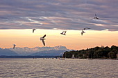 Sunrise in Starnberg with a view over the lake and the Zugspitze, Starnberger See, 5-Seen-Land, Upper Bavaria, Bavaria, Germany