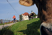 Cyclist and cow in front of the Wieskirche, Steingaden, Pfaffenwinkel, Upper Bavaria, Bavaria, Germany