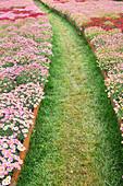 Path cutting through blooming flowers, Genoa, Liguria, Italy, Europe