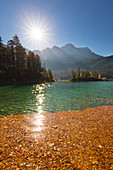 Autumn at the Eibsee, leaves floating as a carpet on the water, view to the Zugspitze, Werdenfelser Land, Bavaria, Germany