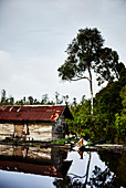 Dogs stand watch at a wooden shack on the Katingan river, Central Kalimantan, Borneo, Indonesia.