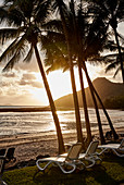 Sunrise over Catseye Beach with the palm trees and sun lounges, Hamilton Island, Whitsunday Islands, Queensland Australia.