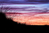 Wild grasses silhouetted against a sunset sky in outback Australia.