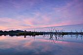 An iridescent pink streak across the sky at sunrise, Lily Creek Lagoon, Kununurra, Western Australia, Australia.