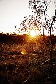 Sunrise in the outback, Kununurra, The Kimberley, Western Australia, Australia.