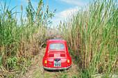 Car parked among long grass, Lipari, Aeolian Islands, Sicily, Italy