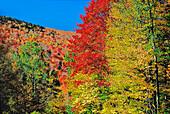 Autumn Scene, Greenville, Maine, USA