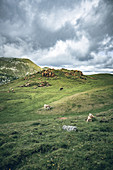 Red rocks at the red castle and cows in the pasture, Nockberge Biosphere Park, Carinthia, Austria, Europe.