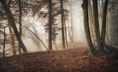 November fog in the beech forest, Bavaria, Germany, Europe
