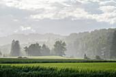 Summer rain shower near Polling, Weilheim, Bavaria, Germany, Europe