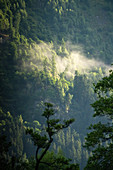 Apine mountain landscape with trees in the morning mist, Döbriach, Carinthia; Austria, Europe.