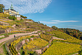 Vineyards of Radebeul in autumn, with the Spitzhaus in the background, Saxony, Germany