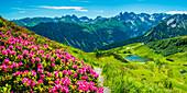 Alpine rose blossom, panorama from the Fellhorn over the Schlappoldsee and mountain station of the Fellhornbahn to the central main ridge of the Allgäu Alps, Allgäu, Bavaria, Germany, Europe