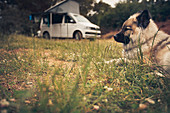 VW bus and dog, VW T6 California, pop-up roof, awning, Bulli, French Riviera, France,