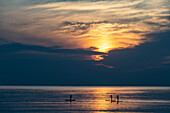 Three stand-up paddlers at sunset on the sea, Kungsbacka, Halland, Sweden