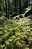 Moos near Grainau in Werdenfelser Land near Garmisch-Partenkirchen, Upper Bavaria, Germany, Europe