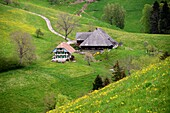 in the Emmental near Affoltern, Bernese Oberland, Switzerland
