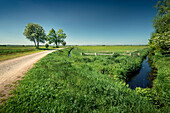 Dirt road with cyclists in Teufelsmoor, Worpswede, Osterholz, Lower Saxony, Germany, Europe
