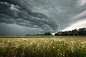 Shelf cloud over grain field in Aurich-Brockzetel, East Frisia, Lower Saxony, Germany, Europe