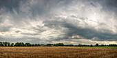 Rain clouds over grain field in Neuenburgerfeld, Zetel, Friesland, Lower Saxony, Germany, Europe