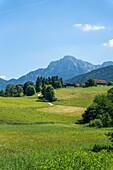 Between Anger and Höglwörth, looking towards Hochstaufen, Chiemgau, Bavaria, Germany