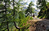At the Oberglanegg-Alm at Timmelsjoch, Passeier Valley, South Tyrol, Italy